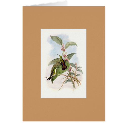 Gould - Snowy-Throated Emerald Hummingbird Greeting Cards
