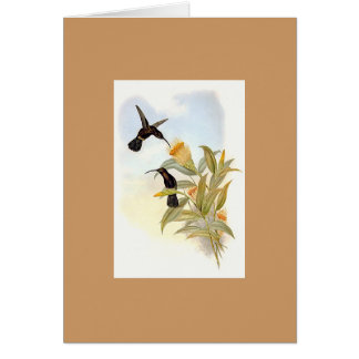 Gould - Sooty Barbed-Throat Hummingbird Greeting Card