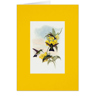 Gould - White-Throated Emerald Hummingbird Greeting Card