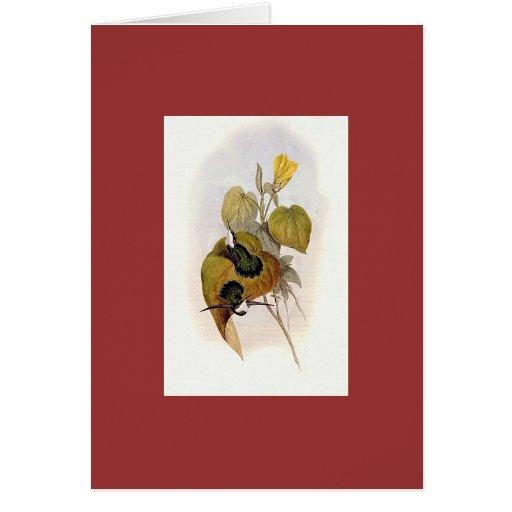 Gould - White-Throated Wedgebill Hummingbird Cards