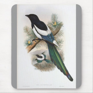 Gould - White-Winged Magpie Mouse Pad