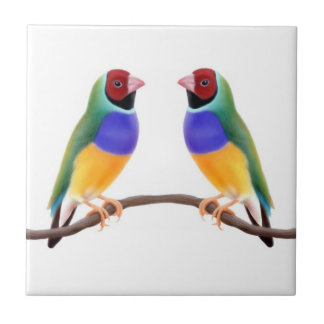 Gouldian Finch Friends Tile