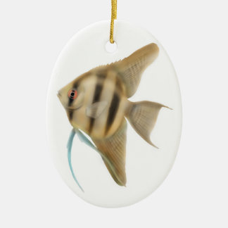 Graceful Angelfish Ornament