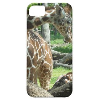 Graceful Giraffe iPhone 5 Case