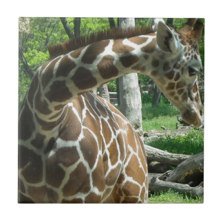 Graceful Giraffe Small Square Tile