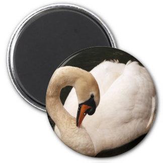 Graceful Swan  Magnet Refrigerator Magnet