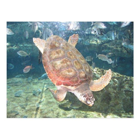 Graceful Turtle Postcard
