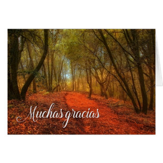 Gracias Spanish Thank You Woodland Path with Oaks Card