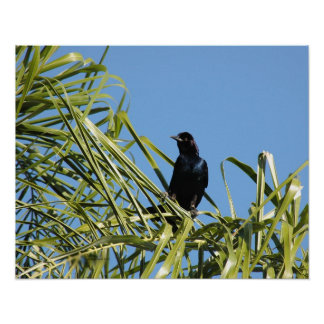 Grackle or Crow Palm Tree Poster