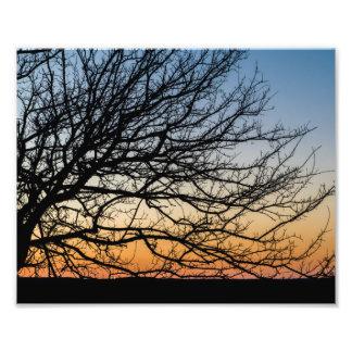 Gradient Sky in Winter Art Photo