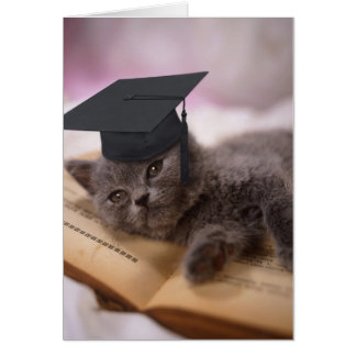 Graduation, cat with hat card