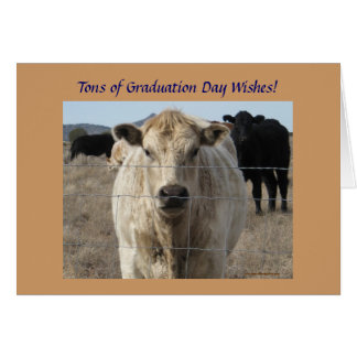Graduation Wishes - Cute White Cow - Ranch or Farm Greeting Card