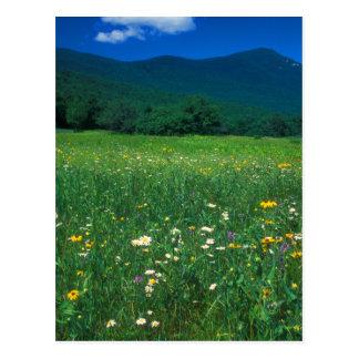 Grafton Notch meadow Postcard