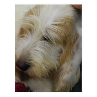 Grand Basset Dog Postcard