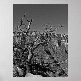 Grand Canyon #1 Poster
