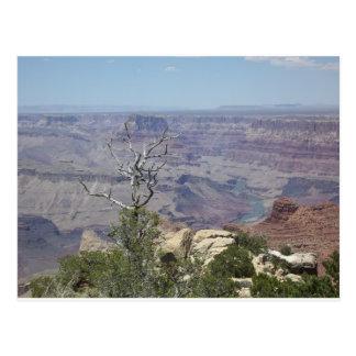 Grand Canyon Arizona Postcard
