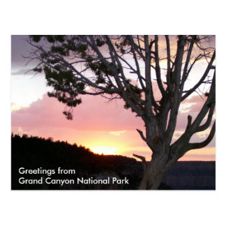 Grand Canyon at Sunset with Tree Silhouettes Postcard