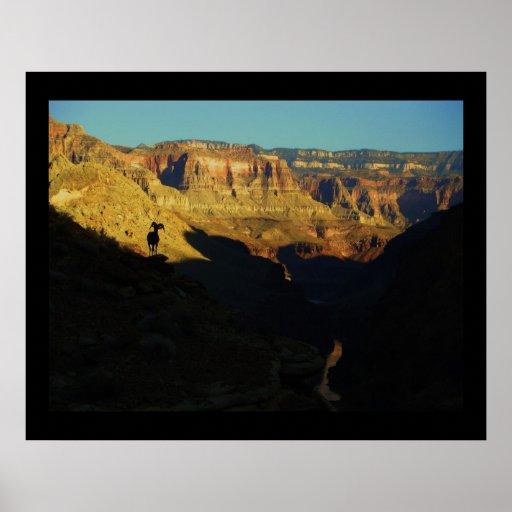 Grand Canyon Bighorn Print