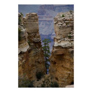 Grand Canyon Hidden Tree 4822 Print