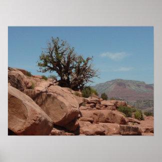 Grand Canyon Shrub Poster