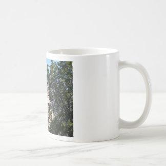 Grand Canyon South Rim Mugs