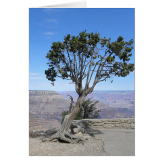 Grand Canyon, South Rim tree card