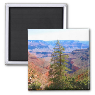 grand canyon tree square magnet