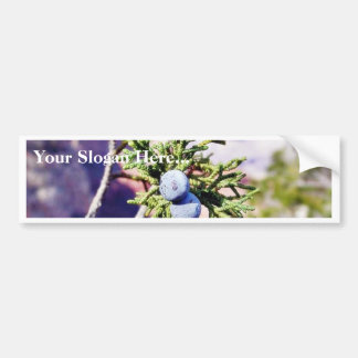Grand Canyons Junipers Berry Berries Bumper Stickers