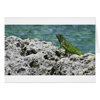 Grand Cayman Islands Green Iguana Card