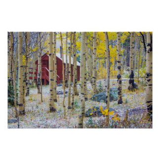 Grand Mesa Solitary cabin in a forest Poster