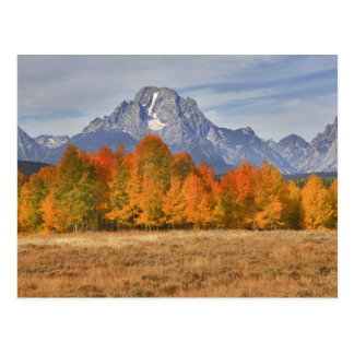 Grand Teton NP, Mount Moran and aspen trees Postcard