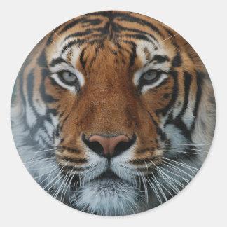Grand Tiger Sticker
