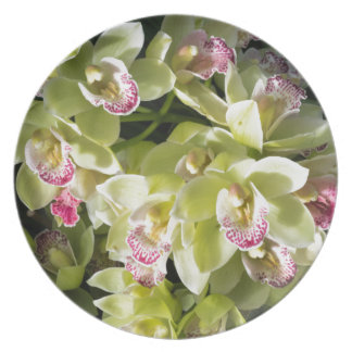 Grand yellow boat orchids plate