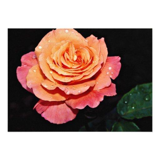 Grandiflora Rose 'Sundowner' White flowers Personalized Invite
