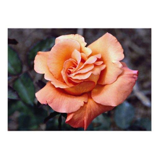 Grandiflora 'Sundowner' Roses Custom Announcements