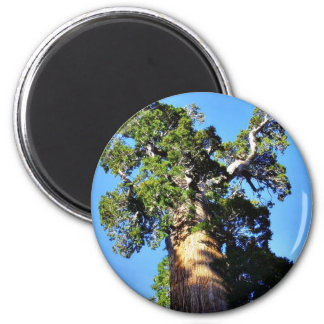 Grant Trees Sequoias Bark Branches Magnet