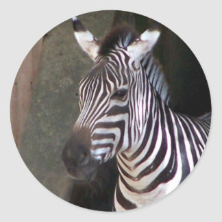 grants zebra round sticker