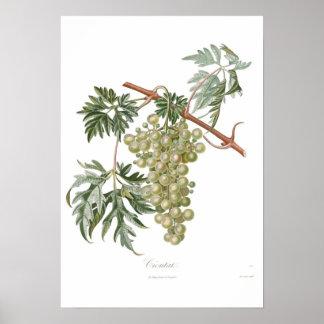 Grape,Cioutat Poster
