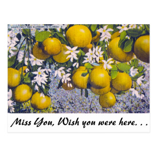 Grape Fruit and Blossoms in Florida Postcard