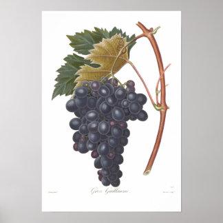 Grape,Gros Guillaume Poster