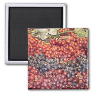 Grape Harvest Magnet