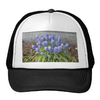 Grape Hyacinth Cap