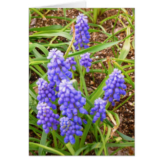 Grape Hyacinth Card