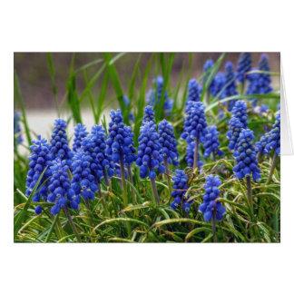Grape Hyacinth Card