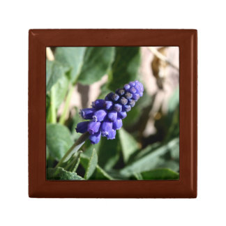 Grape Hyacinth Gift Box