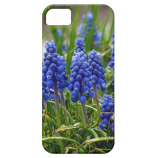 Grape Hyacinth iPhone 5 Cover