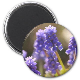 Grape Hyacinth  Magnet Refrigerator Magnets