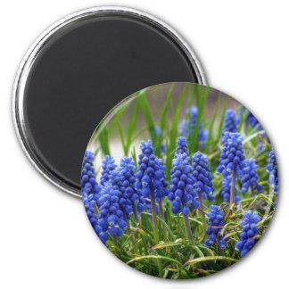 Grape Hyacinth Magnet