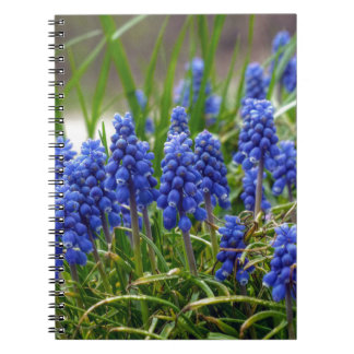 Grape Hyacinth Notebooks