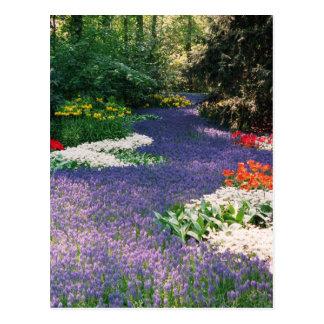 Grape Hyacinth River Postcard